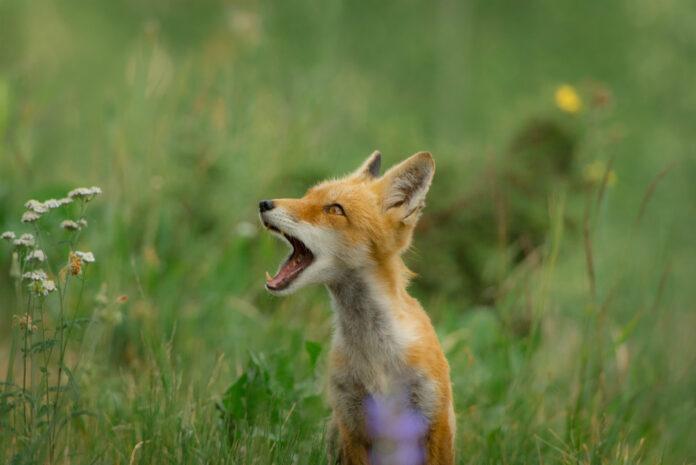 best wildlife photographers on instagram