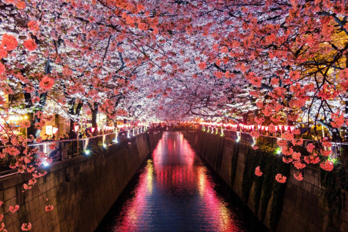quirky things to know about visiting japan