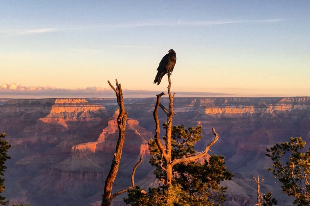 wildlife in the grand canyon