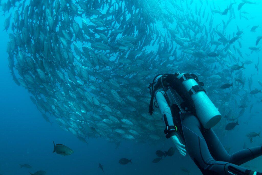 Scuba Diving Tulum Mexico