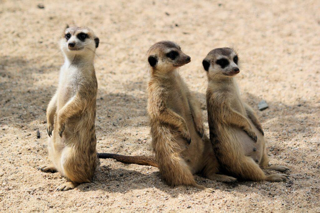 virtual tours zoo