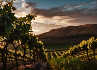 wine lovers vacation