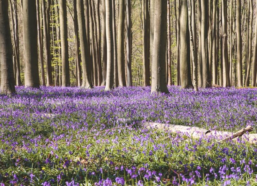 the blue forest belgium