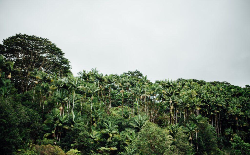 The Island of Hawaii greenery