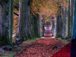 Fall destinations