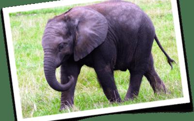 The Earnest Elephant Fable