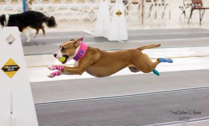 Local dog goes from near death to champion