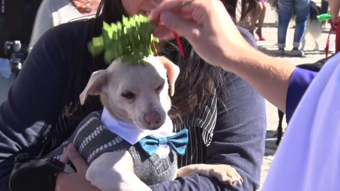 Church hosts annual event in dog park