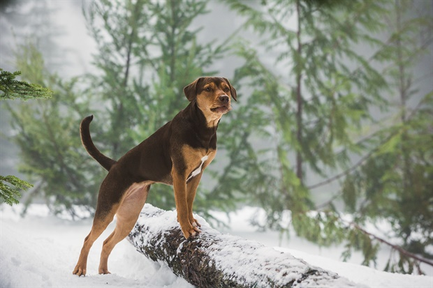 'A Dog's Way Home' requires buying stock in Kleenex