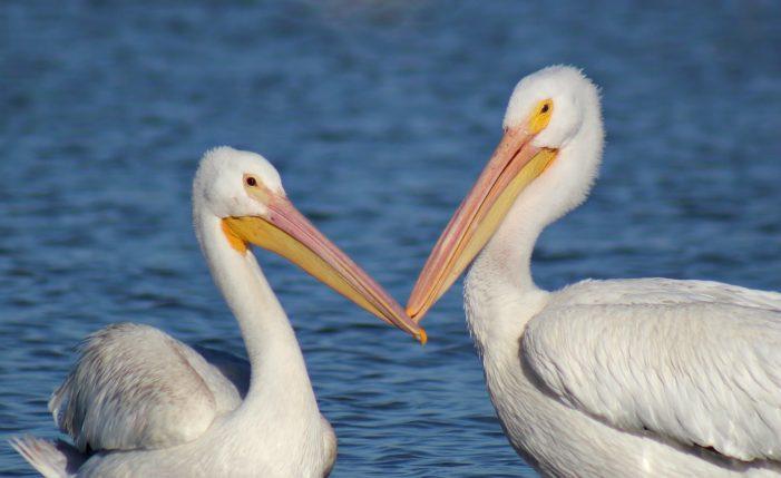 Love birds really do mate for life
