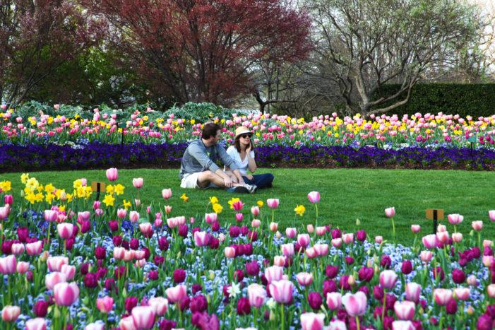 Blooms ready to burst at Botanical Garden