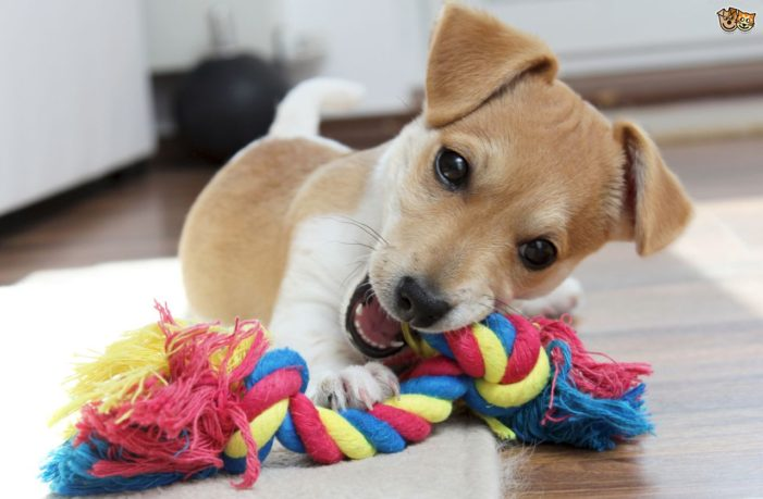 Pets say: Take care of our teeth, too!
