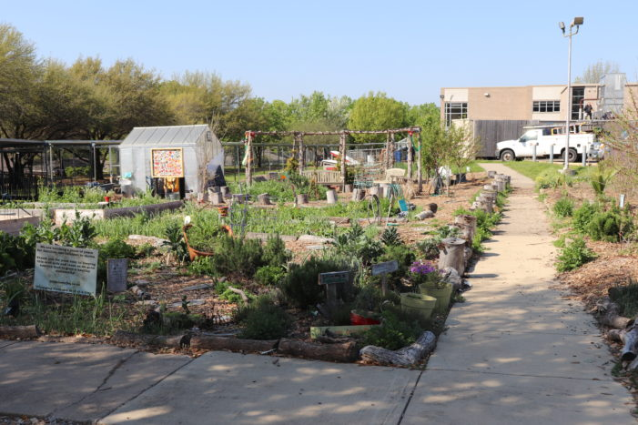 School, seeds and soil connect community