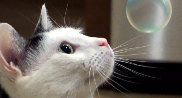Catnip bubbles? Who knew?