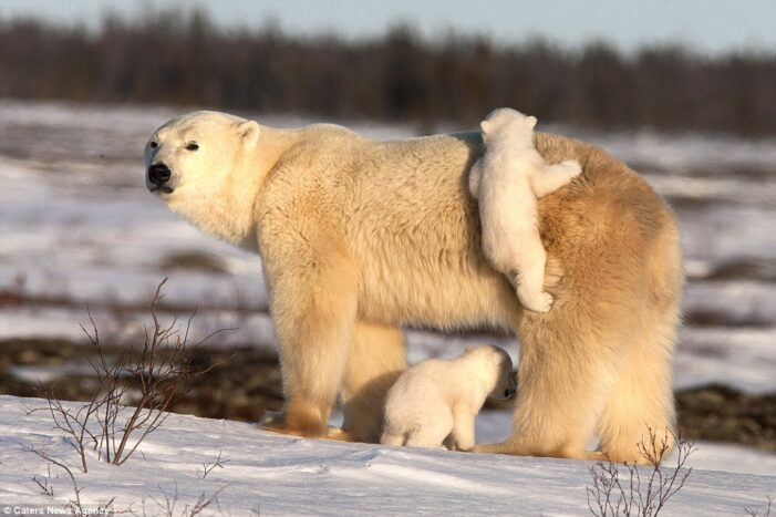 Animal moms make motherhood look easy