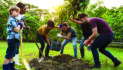 City puts trees at the forefront
