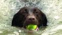 Dog Days of Summer ready for splashing