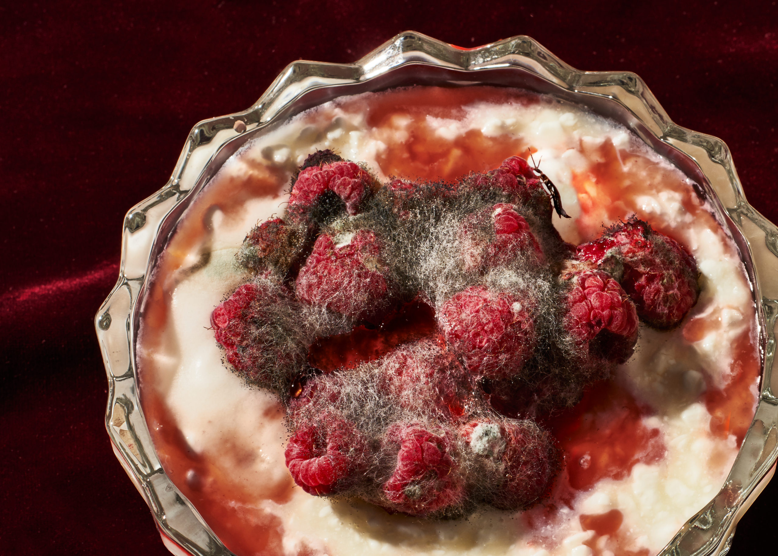 Spoiled Rotten -Yogurt & Earwig – Yasara Gunawardena