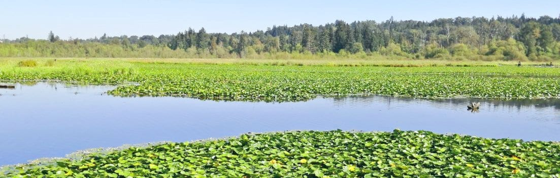Burnaby Lake Will & Estate Planning