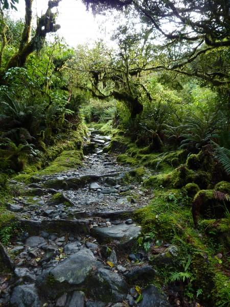 Milford Trek Forest Trail