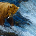 Alaska's Brooks Falls: A Brown Bear Playground