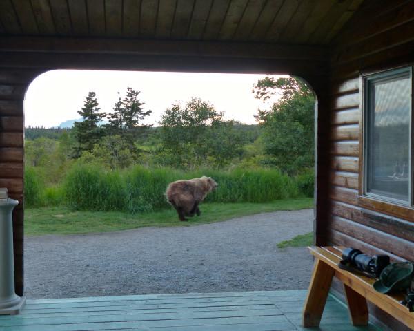 Brooks Falls- bear running through camp