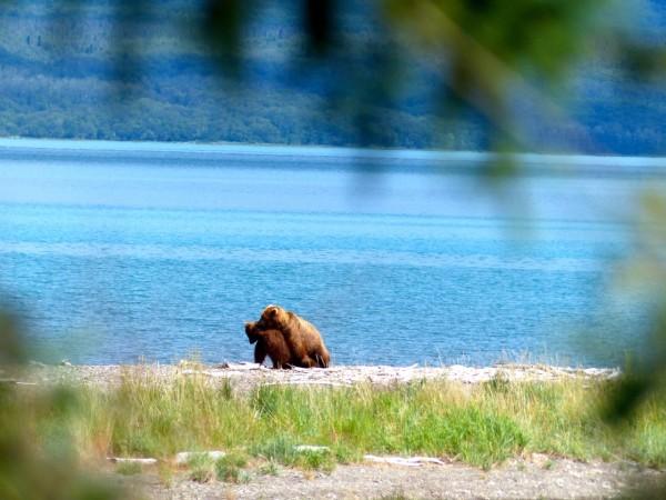 Brooks Falls- bear sex