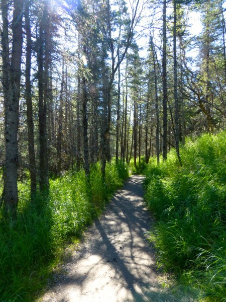 Brooks Falls- path to boardwalk 2