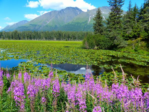 Swan Lake- gorgeous view 2