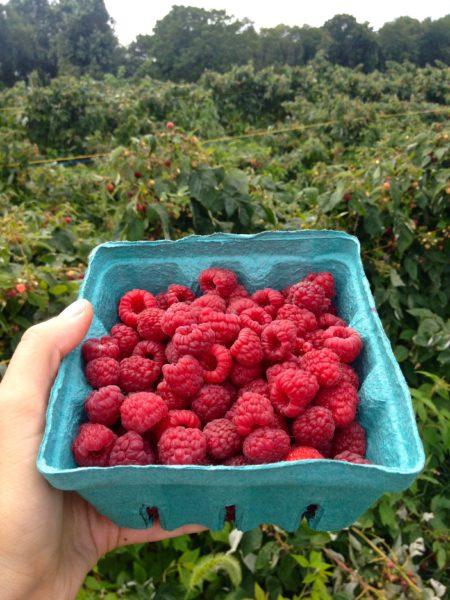 Carton of Raspberries