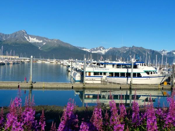 Kenai Fjords- boat in Seward Harbor