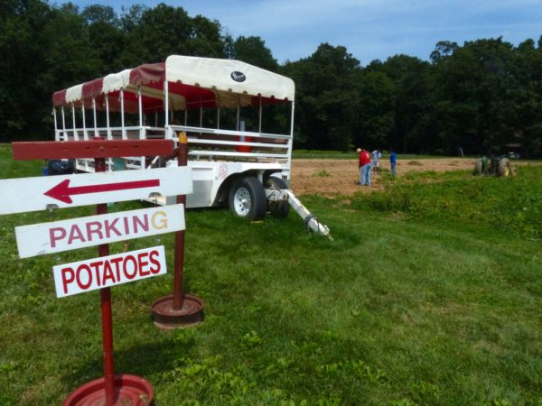 Potato Bus 2
