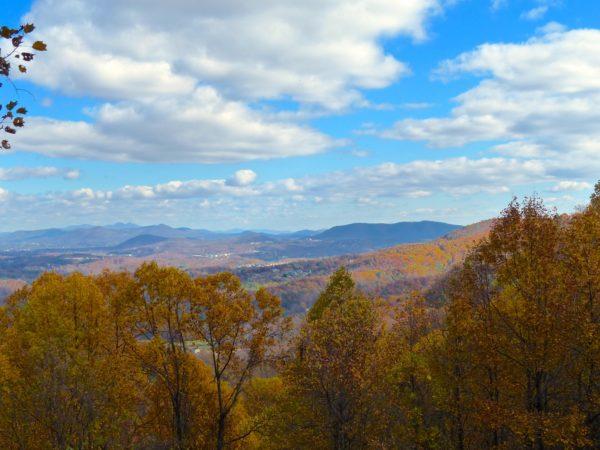 Blue Ridge Treetops