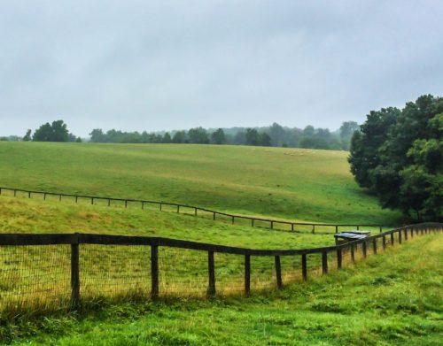 Lambstock-- the pasture
