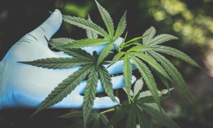 Cannabis: The Female Viagra