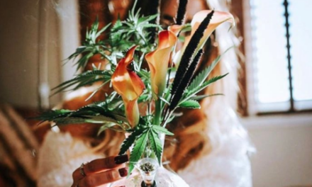 Follow these 15 Women in Weed