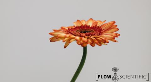 Terpene flower, with Flow Scientific logo