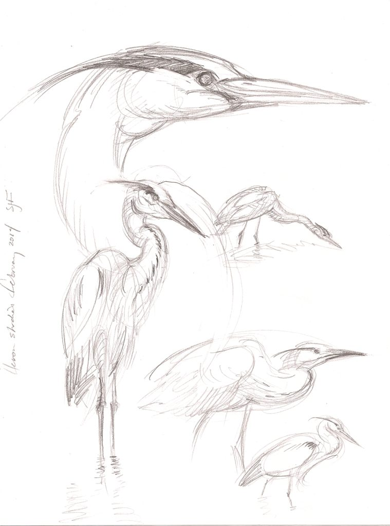 "Heron Studies, 2014. Graphite on paper, 10x8"" Sold"