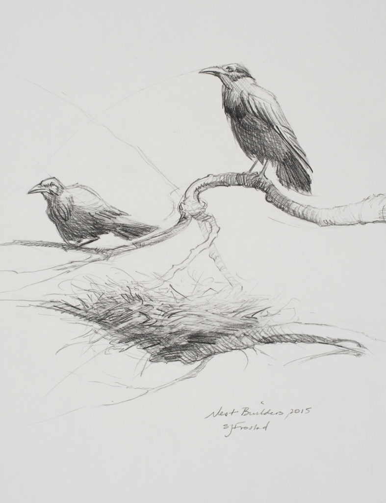 """Nest Builders, 2015. Graphite on paper, 10x8"""" Sold"""