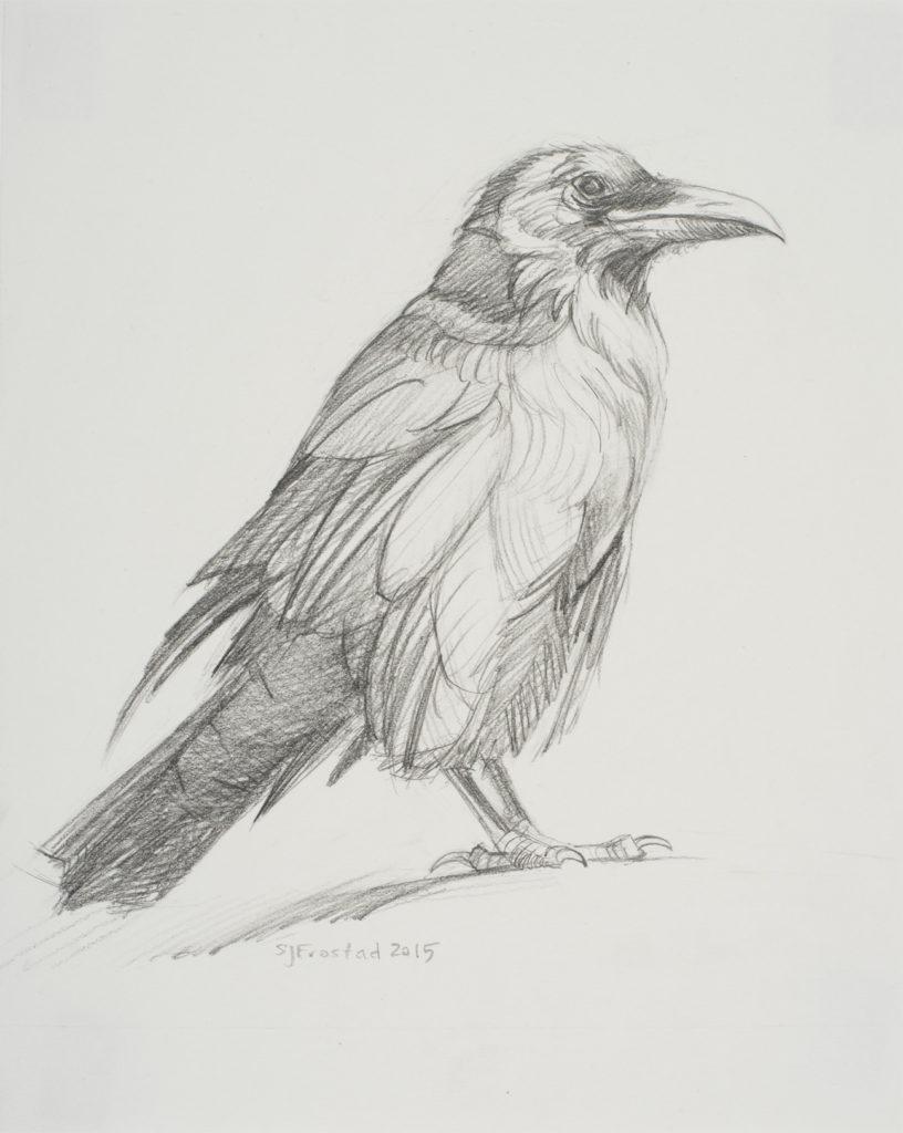 "Sun-struck Raven, 2015. Graphite on paper, 10x8"" Sold"