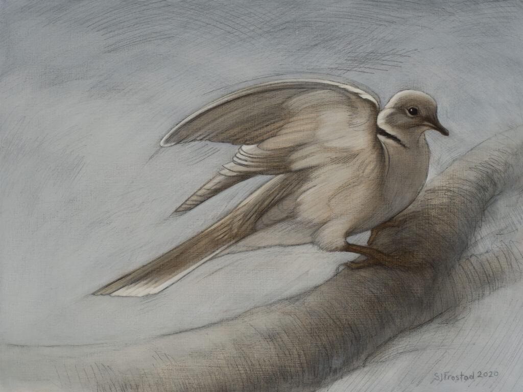 "Turtle Dove, Winter, 2020. Graphite & oil on wood panel, 9x12"" Sold"