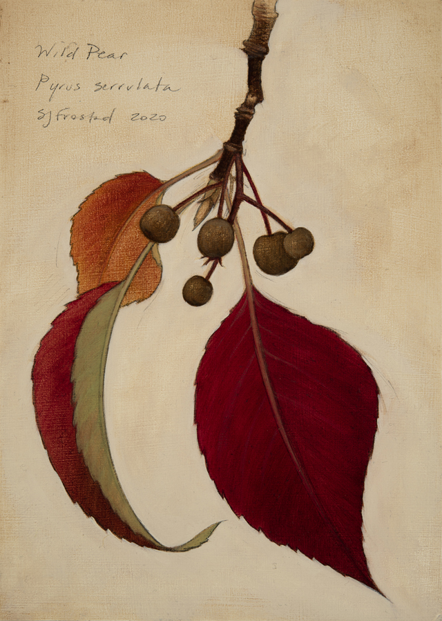 """Wild Pear, 2020. Graphite & oil on wood panel, 7x5"""". Sold"""