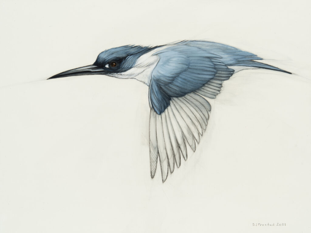"""Kingfisher, 2021. Graphite & oil on wood panel, 9x12"""", 400."""