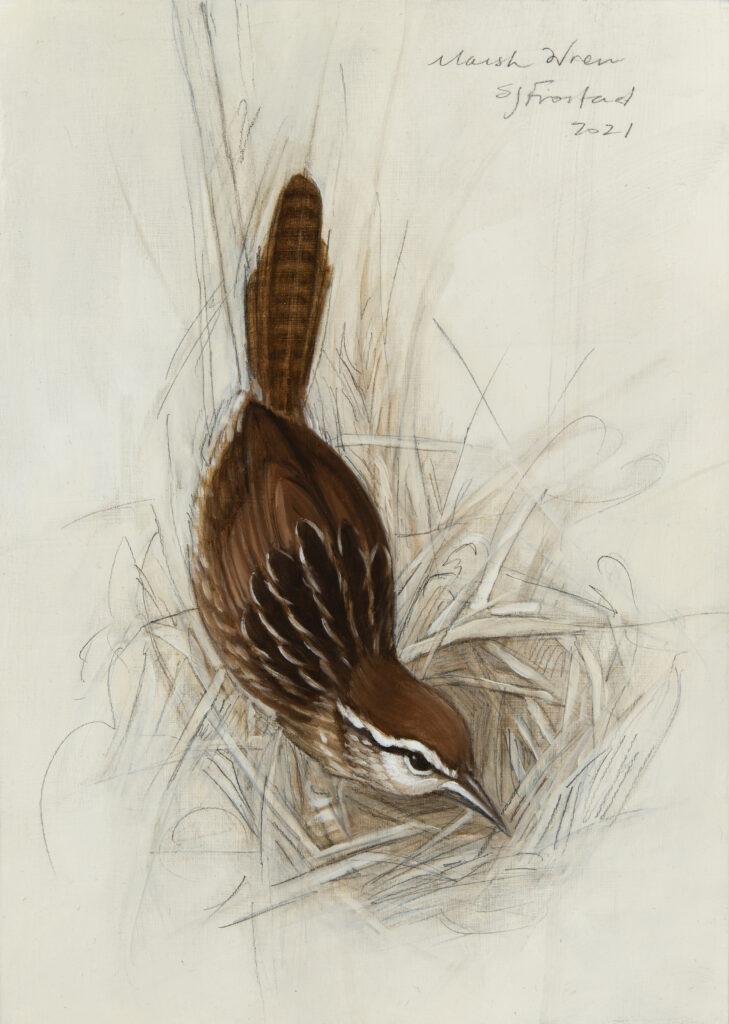 """Marsh Wren, 2021. Graphite & oil on wood panel, 7x5"""", Sold"""