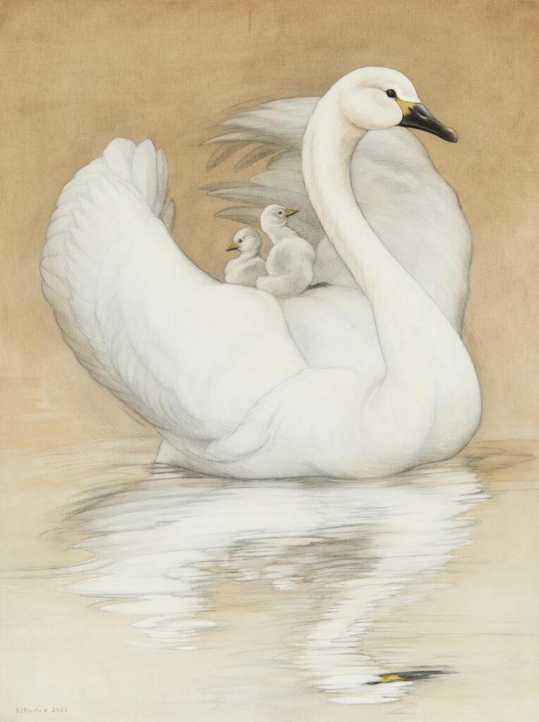 "Swan & Cygnets, 2021. Graphite & oi on wood panel, 24x18"", 900."