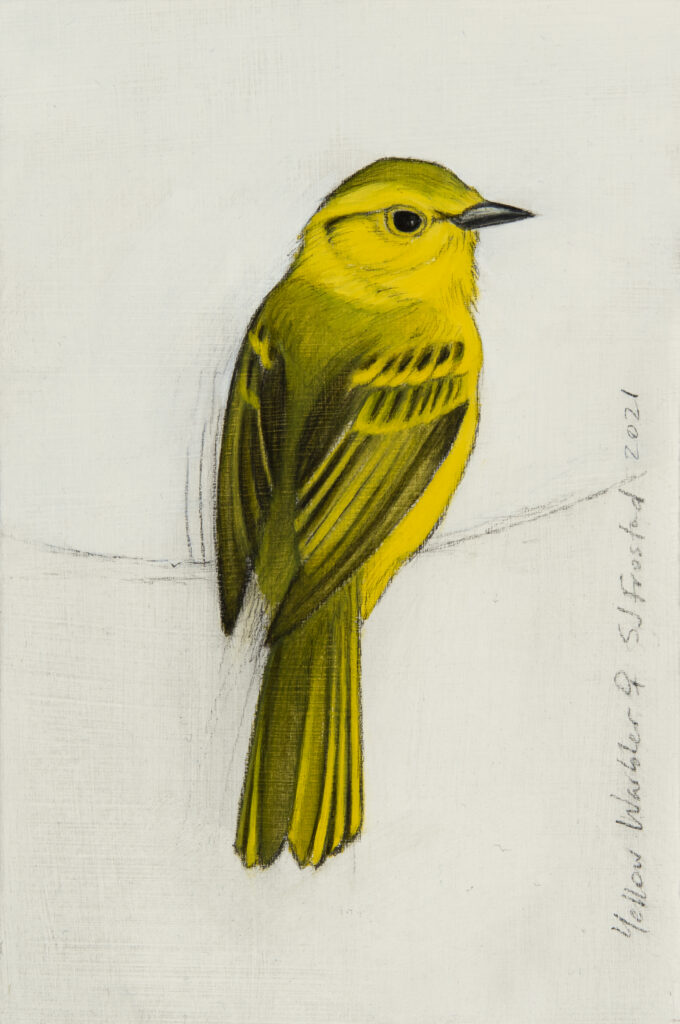 """Yellow Warbler, 2021. Graphite & oil on art board, 6x4"""" Sold"""