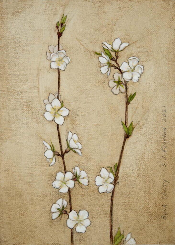 """Bush Cherry, 2021. Graphite & oil on art board, 7x5"""". 150"""