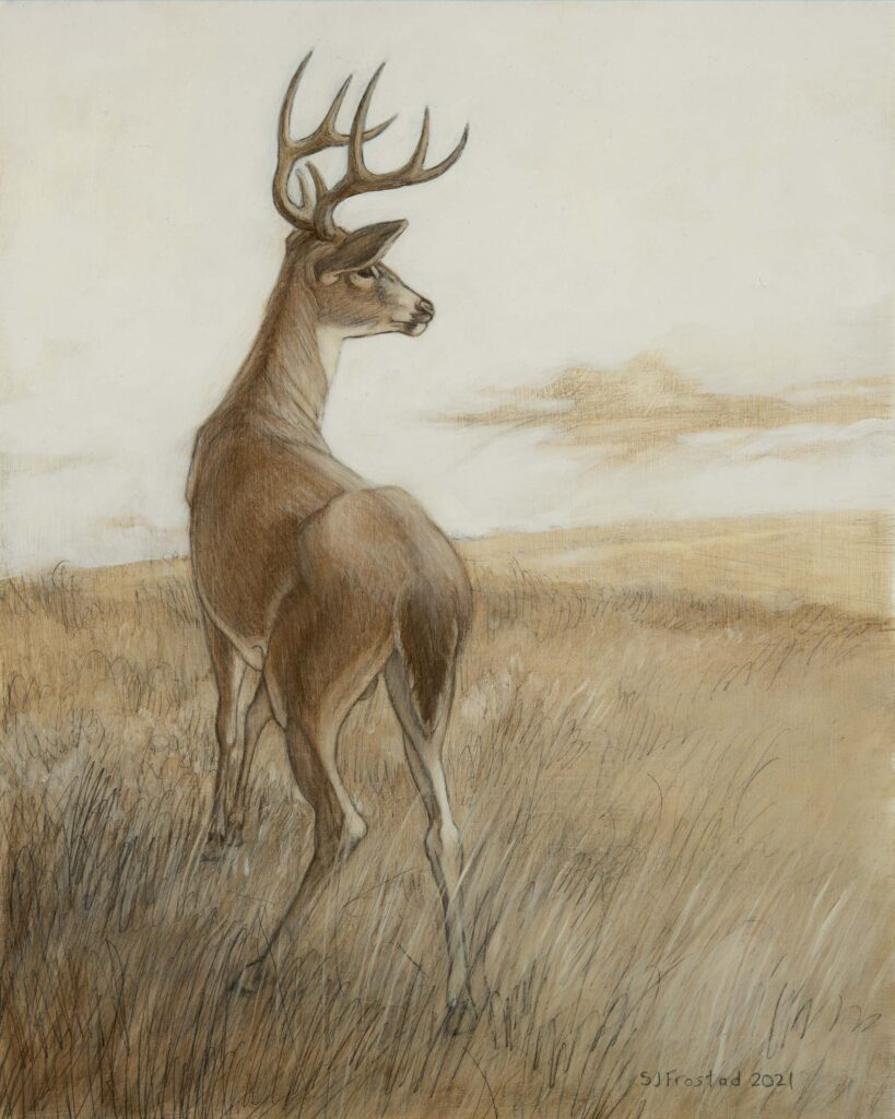 """Whitetail Study, 2021. Graphite & oil on wood panel, 10x8"""". Sold"""