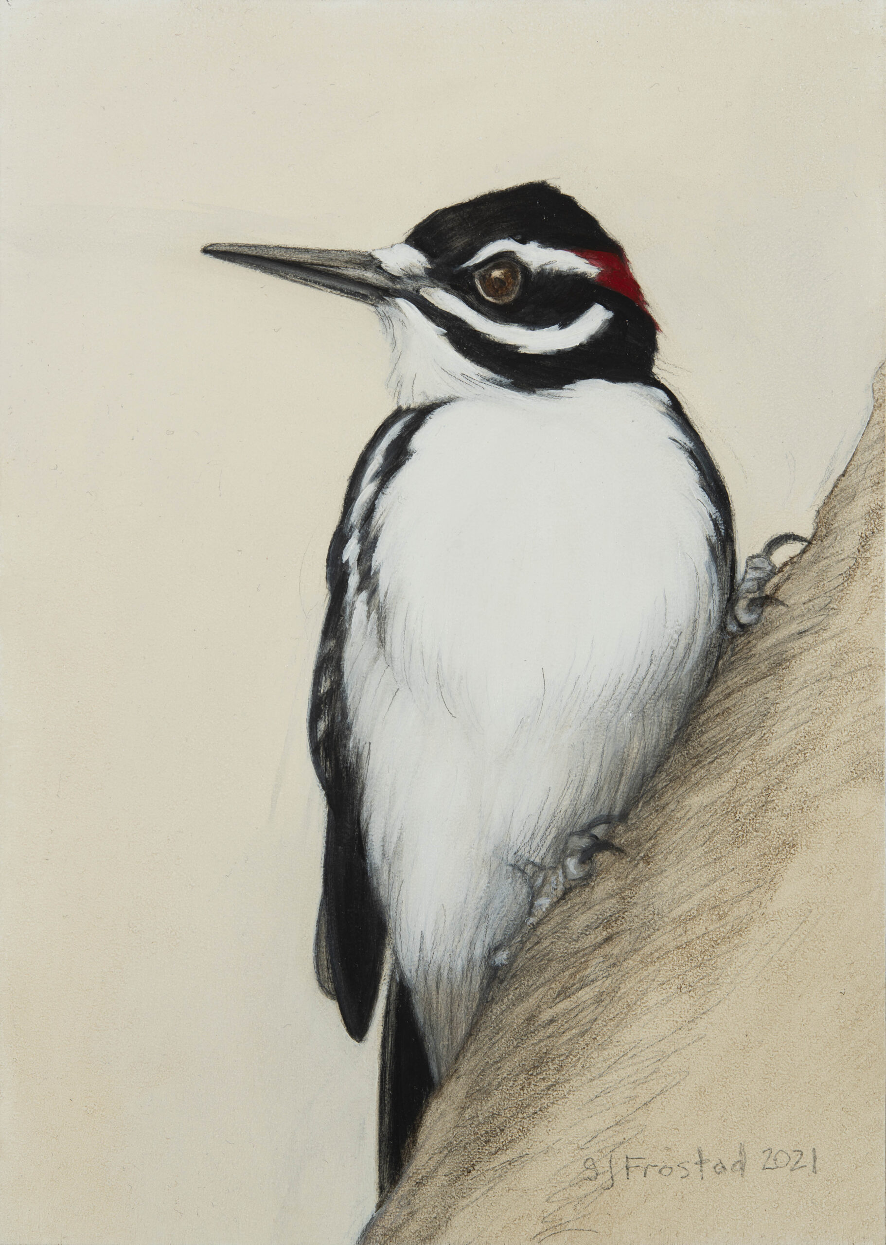 """Hairy Woodpecker, 2021. Graphite & oil on wood panel, 7x5"""" 150"""