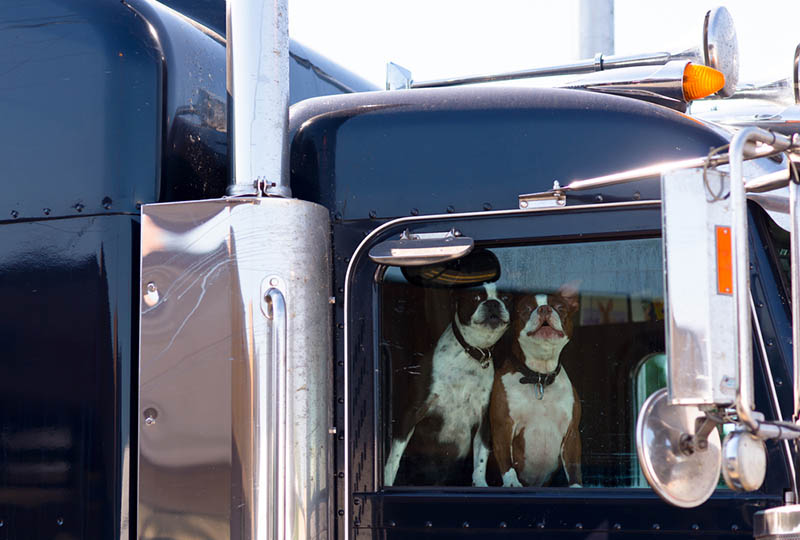 trucking companies that allow dogs